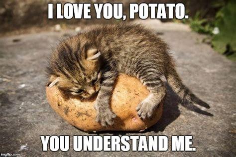 I Love Me Meme - potato cat imgflip