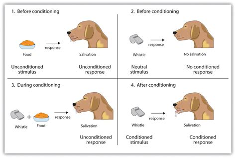 exle of classical conditioning the radical education classical conditioning