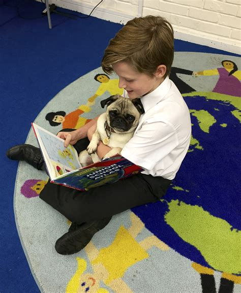 pugs as therapy dogs doug the pug therapy makes a difference to many lives the pug diary