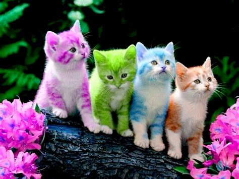 colorful cat wallpaper cats colored kitties kittens cats colors cute wallpaper