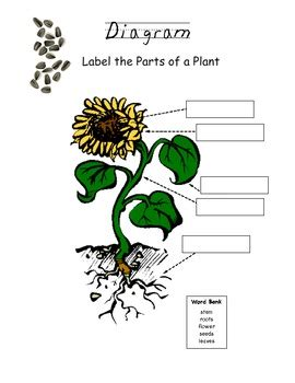 why are plants green worksheet 7 2 plant diagram worksheet delibertad