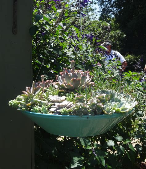 Succulent Planter Ideas by Succulent Garden Ideas Succulents In A Hanging Planter