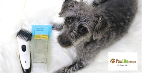 6 ways to reduce shedding in dogs paw