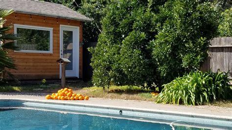 orange harvest complete valley gardens