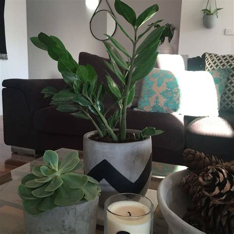 Plants for your coffee table