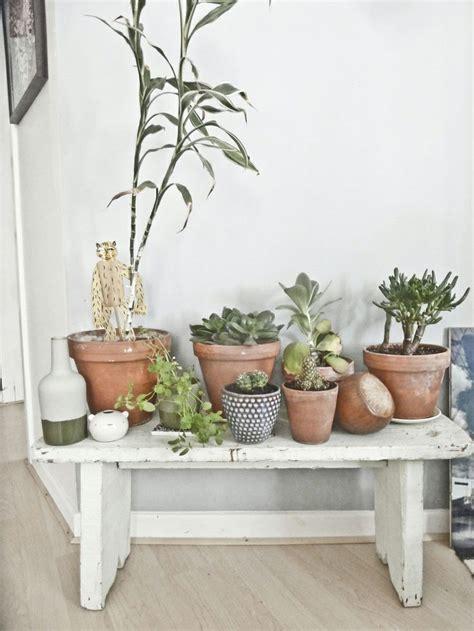 Planten In Huis Trends by Planten In Huis