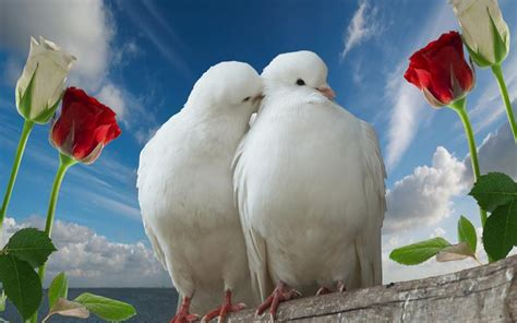 images of love hd full full hd love wallpapers wallpapers9