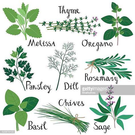 Illustrations Et Dessins Anim 233 S De Plante Aromatique