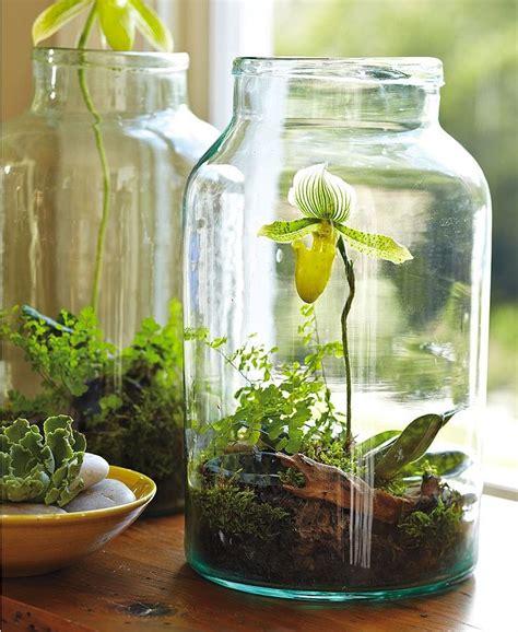 gardens in glass containers orchid bottle garden terrarium bottle