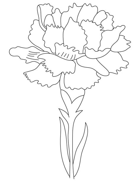 carnation flower coloring page coloring pages