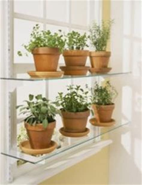 Kitchen Window Shelf For Herbs by 1000 Images About Window Plants On Glass