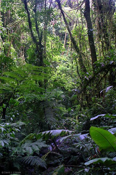 Forest L by Forest Costa Rica 2002 By David J L Hoste