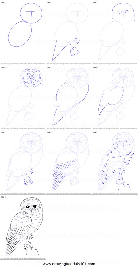 spotted owl coloring page how to draw a spotted owl printable step by step drawing