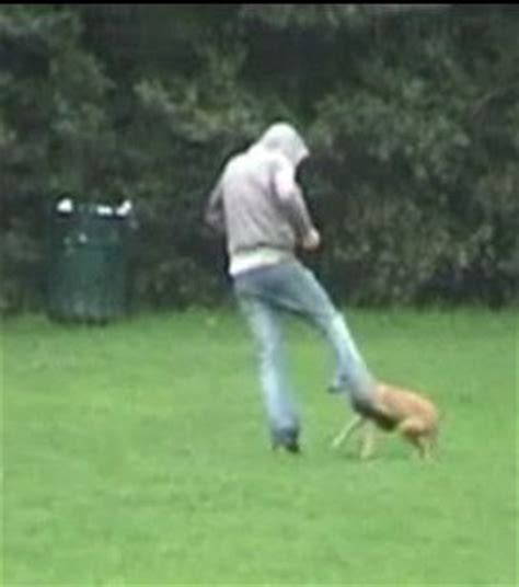 kicked puppy filmed kicking sentenced to time