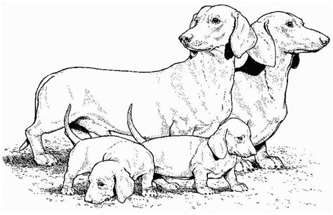 dachshund puppies coloring pages dachshund coloring pages az coloring pages