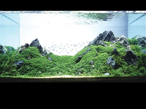 aquascaping aquarium aquatic eden aquascaping aquarium blog