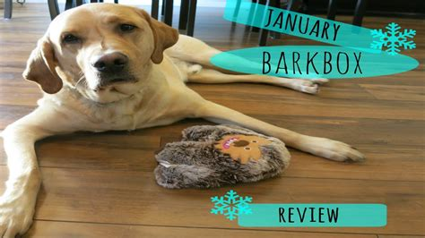 barkbox new year january barkbox review with cooper