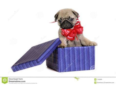 puppy present puppy present royalty free stock image image 7762826