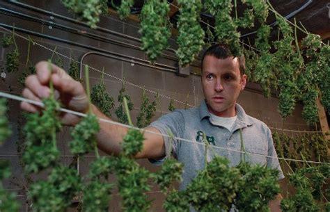 Comment Planter Du Cannabis En Intã Rieur Comment Pousser Du Cannabis Le Guide D 233 Finitif