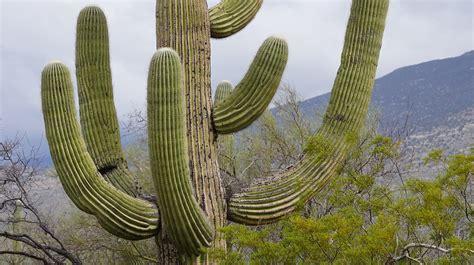 Piante Grasse Mignon by Photo Gratuite Cactus Ennemi Si Mignon Tucson Image