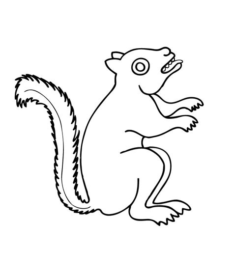 squirrel face coloring page free printable squirrel coloring pages for kids animal place