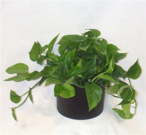 nature indoors has a wide variety of office plants for any