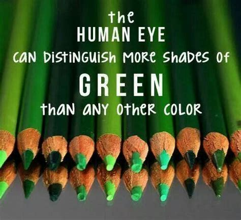 how many colors can the human eye distinguish human eye can distinguish more shades of green than any