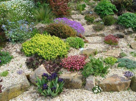 jardin de rocaille avec sedum sempervivum aubri 232 te