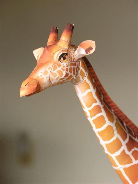 Giraffe Papercraft - giraffe canon papercraft by larry san on deviantart