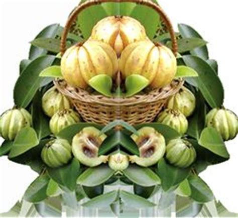 Colon Detox Dischem by Does Dischem Sell Garcinia Cambogia In South Africa