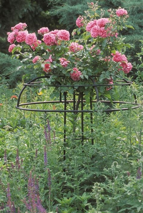 ideas for climbing rose supports umbrella supports of form and elegance classic garden elements