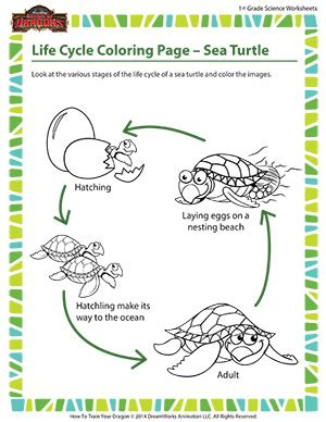 sea turtle worksheets free clipart