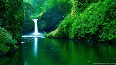 hq forest rainforest wallpapers hq backgrounds hd