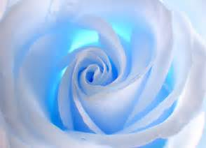 Flower Wall Murals Uk blue and white wall mural wallpapers by allwallpapers