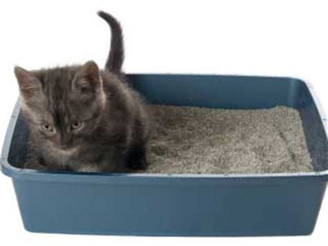 how to a to use a litter box what to do when your cat is not using the litter box