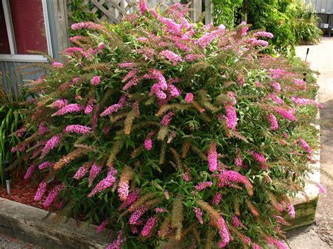 piante giardino fiori da giardino perenni giardinaggio