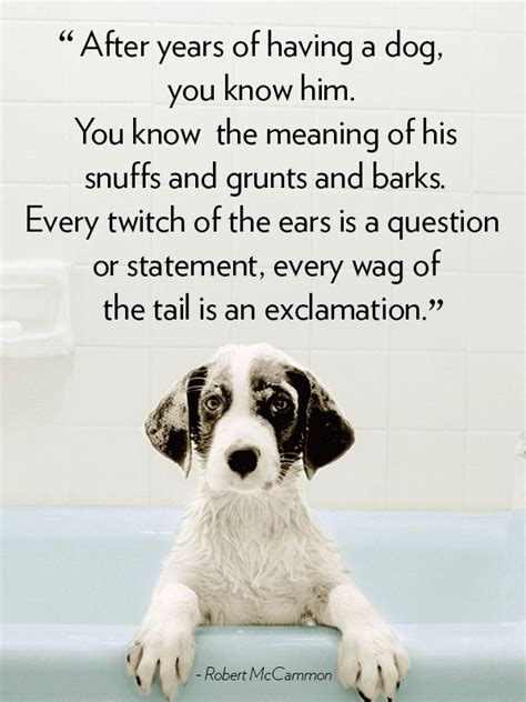 quotes about puppies 16 quotes that will melt your pets puppys and so true