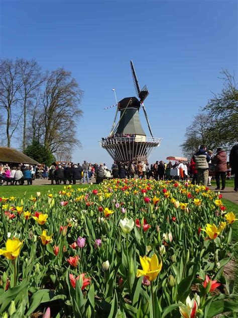 Amsterdam Flower Garden Beyond Amsterdam Keukenhof Flower Gardens In The Netherlands Q Cruise Travel
