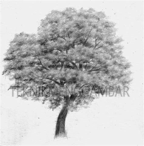 teknik menggambar pohon teknik menggambar