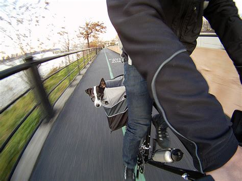 bike basket 20 lbs bike basket for dogs 20 lbs image search results