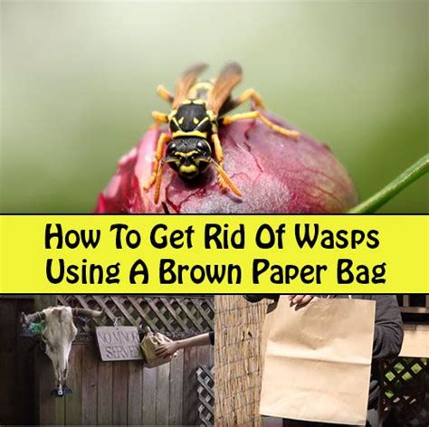 how to get rid of wasps in house siding brown paper bags brown paper and bags on pinterest