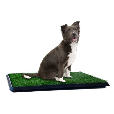 indoor grass for dogs indoor puppy potty trainer pets grass mat patch pad antimicrobial ebay