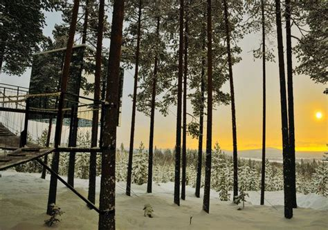treehotel sweden per una full immersion nella natura in tree hotel harads sweden jersey 28 images masters