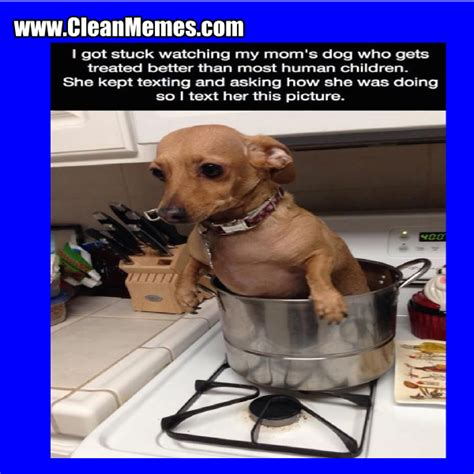 Dog Mom Meme - clean memes clean memes the best the most online page 18