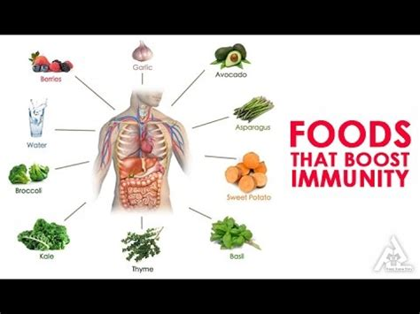 build your immune system fast proven immune boosters healthy anti cancer recipes homeopathic remedies probiotic yogurt recipes herbal tea and detox and strong immunity series volume 3 books foods that boost your immunity best health and