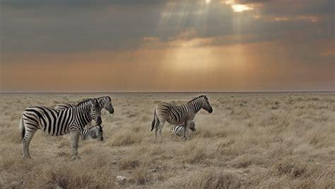 fotos animales fondo de pantalla los 29 mejores wallpapers o fondos de pantalla de animales