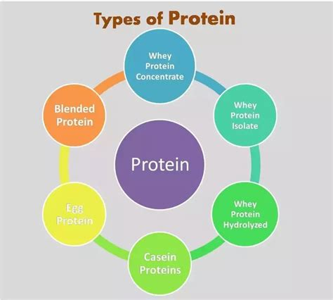 what is the difference in the different types of bellami hair what are the different types of protein powder quora