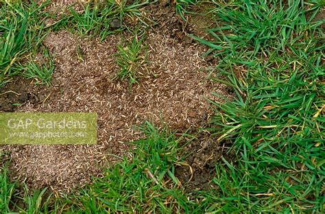 spring lawn seeding tips to make your grass thicker and healthier