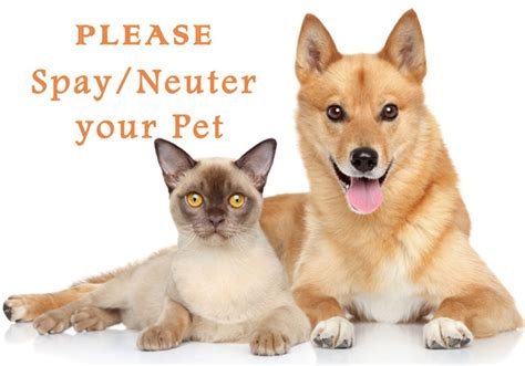 do dogs get spayed or neutered why should i spay or neuter my pet check the answer bestvetcare