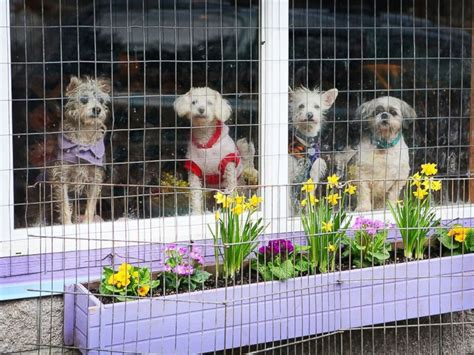 puppy rescue oregon shelter builds colorful cottages for its pups instead of cages abc news